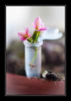 Petit vase pour petite fleur